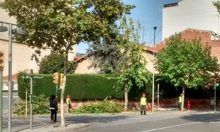 Poda d'arbres a l'eix central del barri